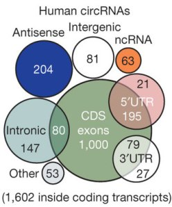 circRNA statistics according to Memczak et al.